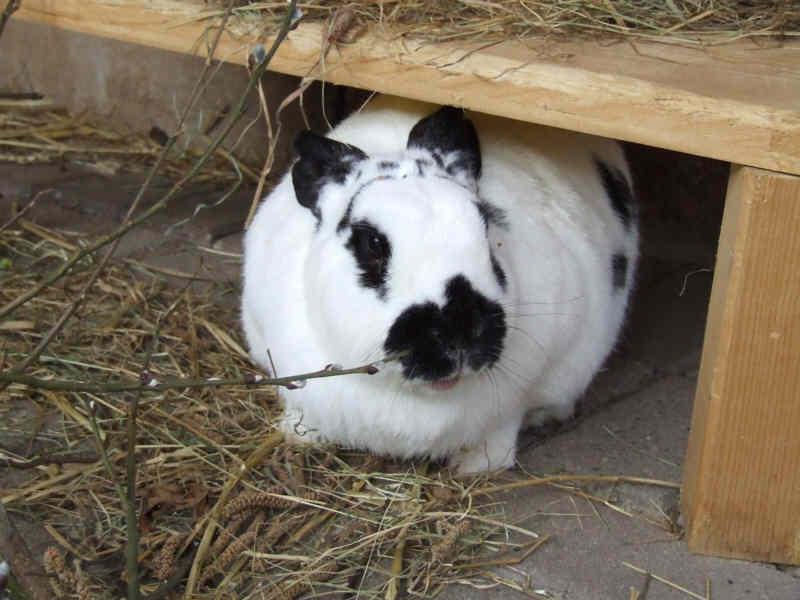 kaninchenforum das kaninchen forum online zwei br der. Black Bedroom Furniture Sets. Home Design Ideas